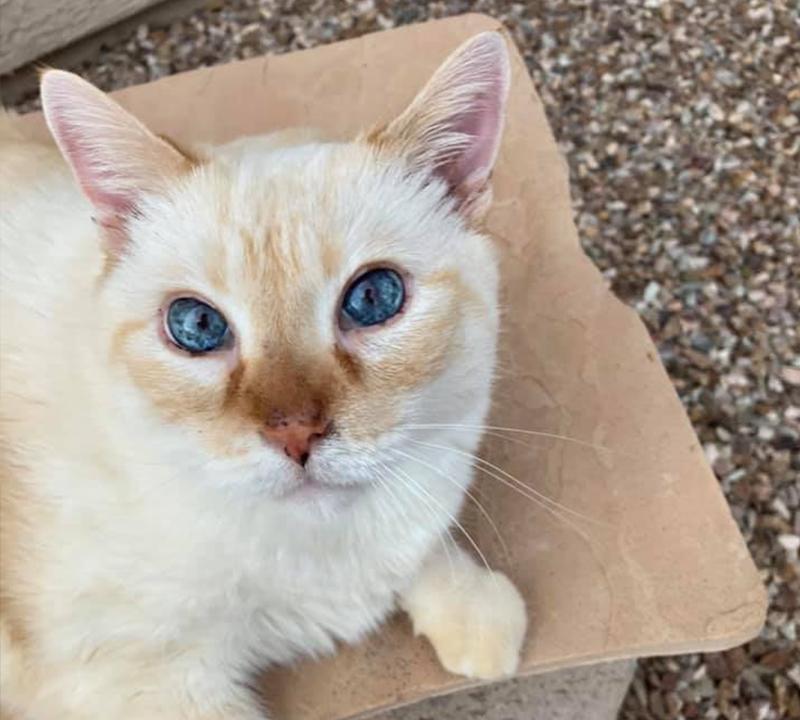 On the box, Rick James