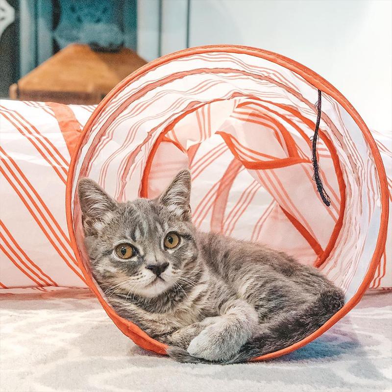 Kitten in a tube